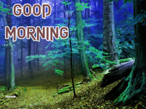 New Good Morning Images  wallpaper download