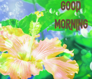 New Good Morning Images picture for hd