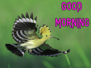 New Good Morning Images  picture for facebook
