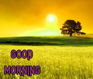 New Good Morning Images photo for whatsapp