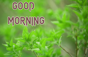 New Good Morning Images  pics for whastapp