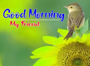 Free Latest Sunflower Good Morning Images Pics Wallpaper Download