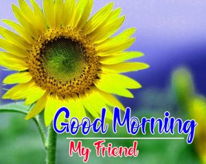 Free Latest Sunflower Good Morning Images Wallpaper Pics Download