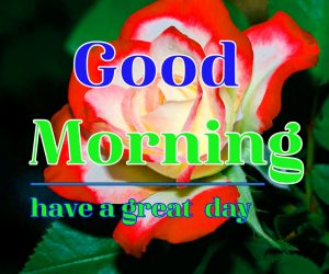 Good Morning Flower Images 1