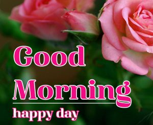 Good Morning Flower Images 15