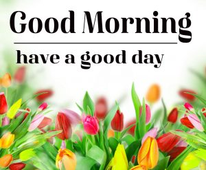 Good Morning Flower Images 16