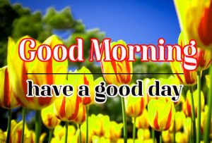 Good Morning Flower Images 17