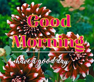 Good Morning Flower Images 2
