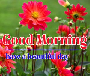 Good Morning Flower Images 4