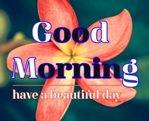Good Morning Flower Images 7