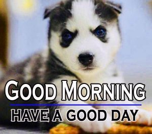 Good Morning Images For Puppy Lover 10