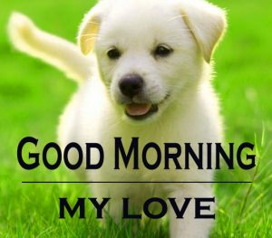Good Morning Images For Puppy Lover 13