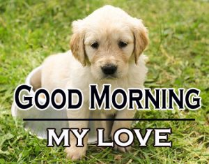 Good Morning Images For Puppy Lover 14