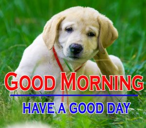 Good Morning Images For Puppy Lover 15