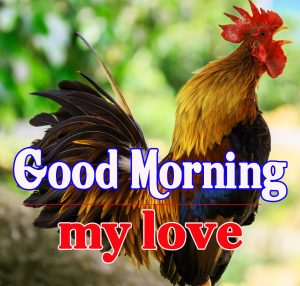 Good Morning Rooster Images 10