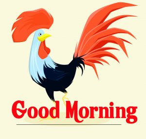 Good Morning Rooster Images 11