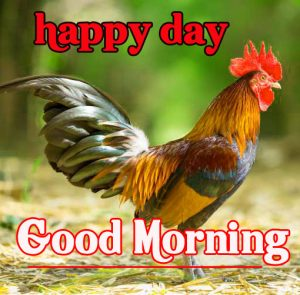 Good Morning Rooster Images 12