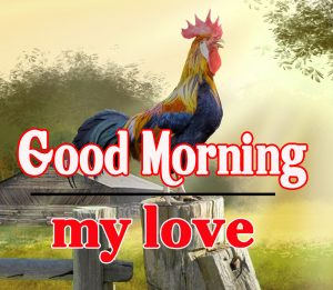 Good Morning Rooster Images 16