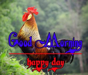 Good Morning Rooster Images 3