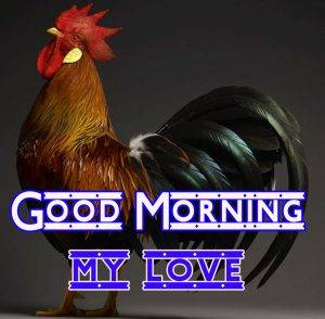 Good Morning Rooster Images 4