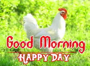 Good Morning Rooster Images 5