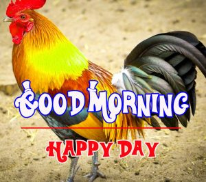 Good Morning Rooster Images 6