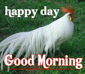 Good Morning Rooster Images 8