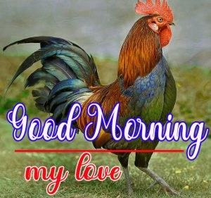 Good Morning Rooster Images 9