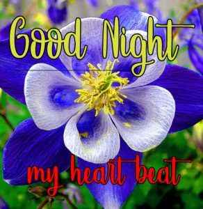 Good Night Wishes Images 13