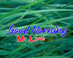 Special Good Morning Images Pics HD Download