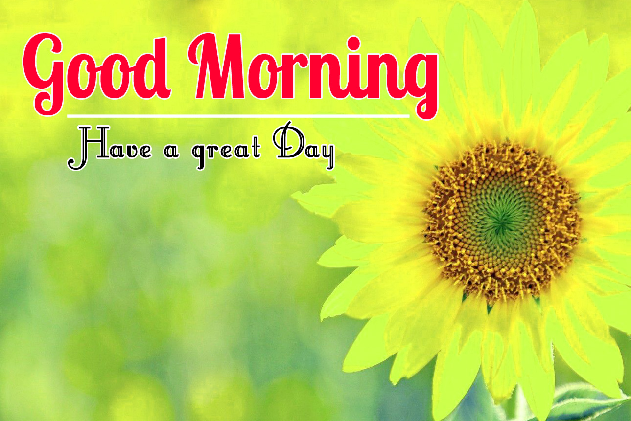 Beautiful 456+ Good Morning Flower Images Free Download For Whatsapp
