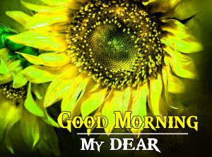 Sunflower Good Morning Images Wallpaper Free Download