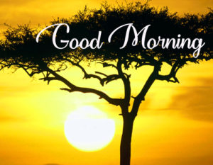 Gud / Good Morning Images  Pictures Wallpaper Pictures pics Free Download