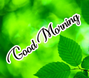 Gud / Good Morning Images  Pictures Wallpaper Photo Pics hd fREE Download