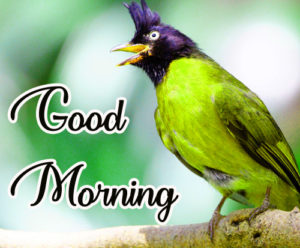 Gud / Good Morning Images  Pictures Wallpaper Photo Pic HD Free Download