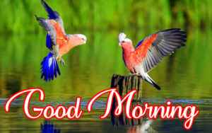 Good Morning Images Wallpaper Pics Photo Pictures Download for Whatsapp