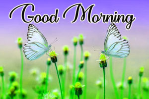 Gud / Good Morning Images Photo Pics Wallpaper Pictures HD In HD Download