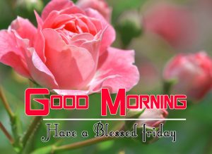 Best Friday Good Morning Images Pics Wallpaper Download