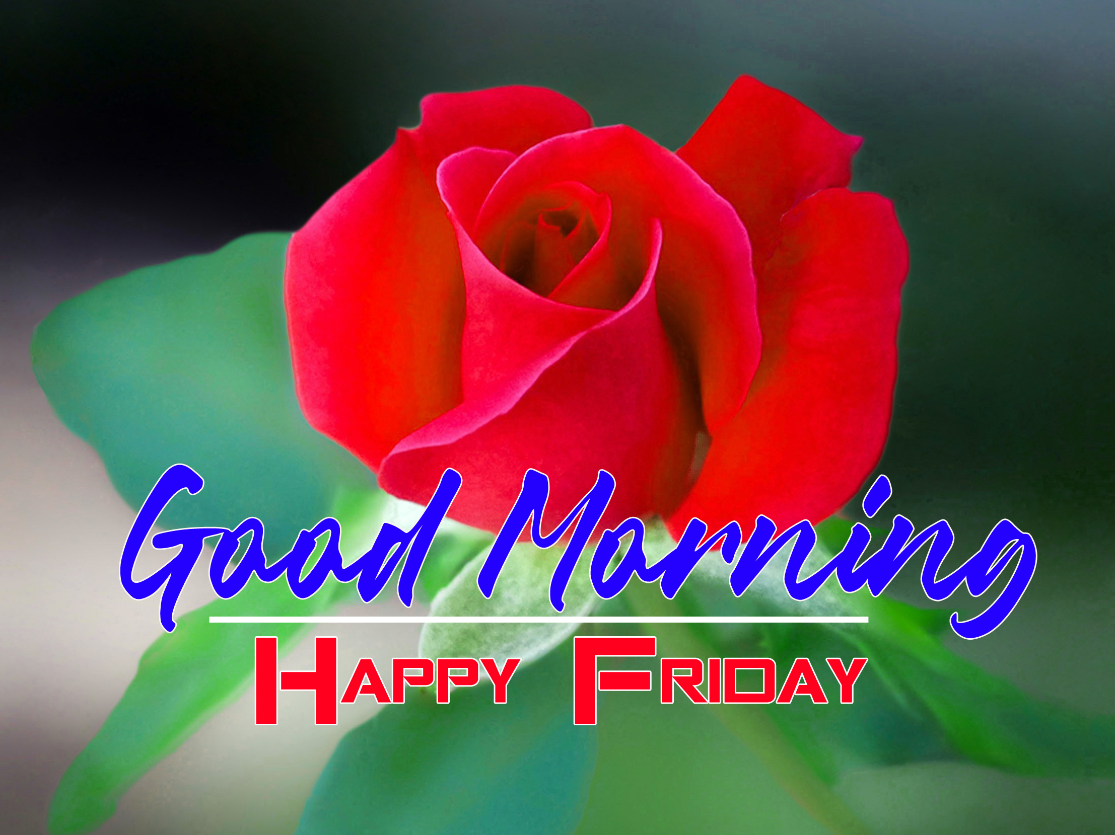 324+ Friday Good Morning Images Wallpaper In HD