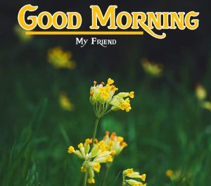 198 Good Morning Images Wallpaper Download For Whatsapp