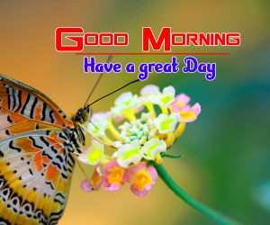 New Good Morning Pics Images Download