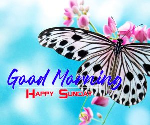 New Sunday Good Morning Images Pics Wallpaper Download