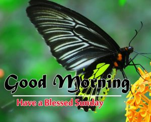 Sunday Good Morning Images Pics Wallpaper for Whatsapp