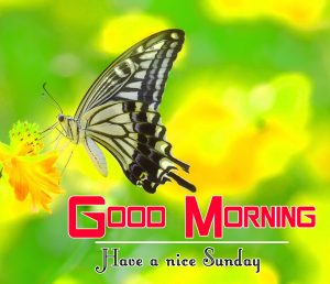 Sunday Good Morning Images Pics photo Download