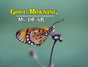 Wife Good Morning Wishes Images Pics Wallpaper Download