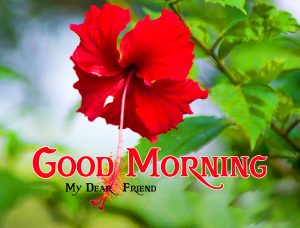 friends good morning images 11