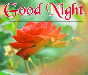 Friend good night Images 15