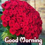 658+ Best Good Morning Images HD 1080p Download 2021