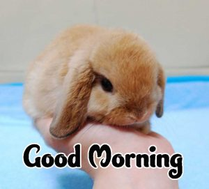 Good Morning Images HD 1080p Download 19 1