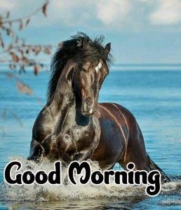 Good Morning Images HD 1080p Download 32